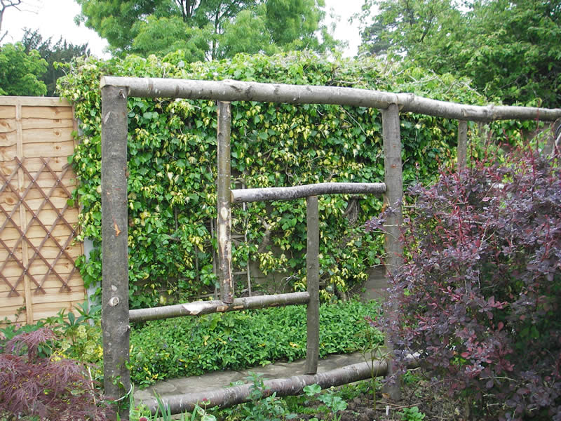 Landscaping With Trellis : Trellis new nieghbours fence and eye saws gardening forum